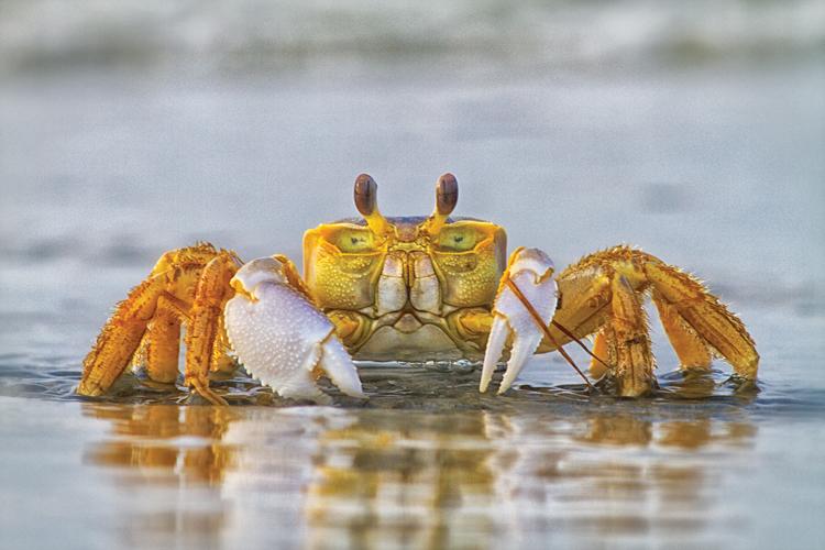 How To Fish For Crabs Holden Beach Nc Holdenbeachnc Com