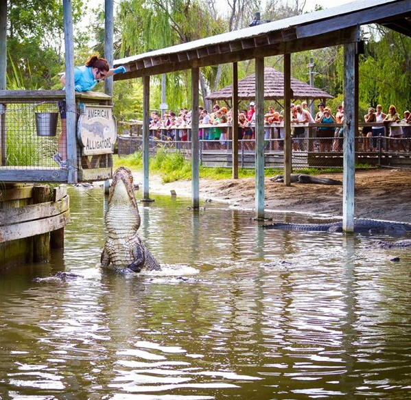 Alligator Adventure Vacation Activity Guide