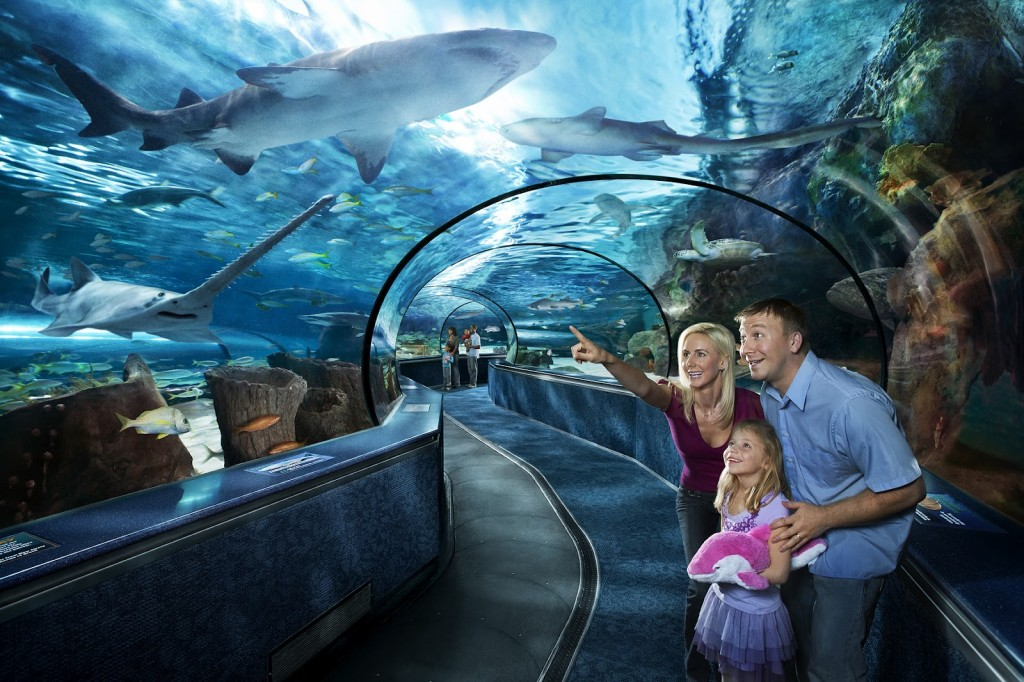 Ripley's Aquarium Vacation Activity Guide